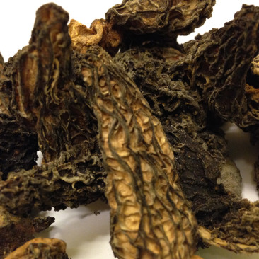 Dried Morel (Morchella)